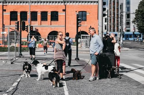 Dogilike.com :: แชร์เก็บไว้เลย! 5 Tip ต้องทำป้องกันอุบัติเหุตช่วงปีใหม่ให้น้องหมา