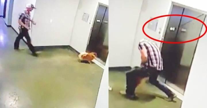 Dogilike.com :: เฉียดตาย! นาทีหนุ่มช่วยหมาปอมฯ ก่อนหวิดถูกลิฟท์หนีบ (คลิป)