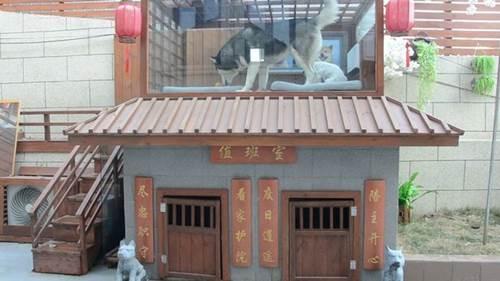 Dogilike.com :: อลังการ! เจ้าของชาวจีนทุ่มเงิน 1.5 แสนสร้างบ้านหรูให้ตูบสุดรัก
