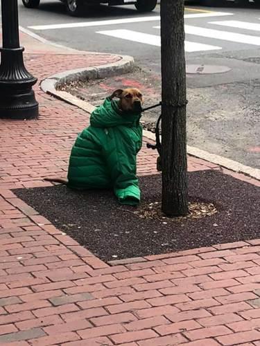 Dogilike.com :: น่ารัก! สาวเห็นตูบถูกผูกให้รออยู่ข้างนอก สละเสื้อกันหนาวให้ทันที