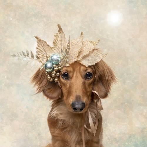 Dogilike.com :: สาวจับน้องหมาไร้บ้านถ่ายภาพรับคริสต์มาส นำเงินช่วยเหลือสัตว์!
