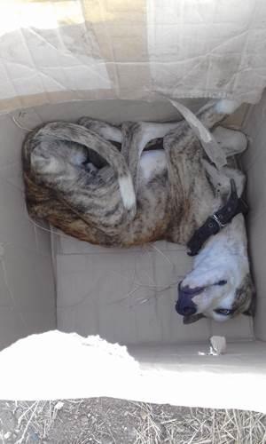 Dogilike.com :: 2 เด็กชายเจอตูบถูกทิ้งในกล่องกระดาษ คนใจดีช่วยดูแลหาบ้านใหม่ให้!