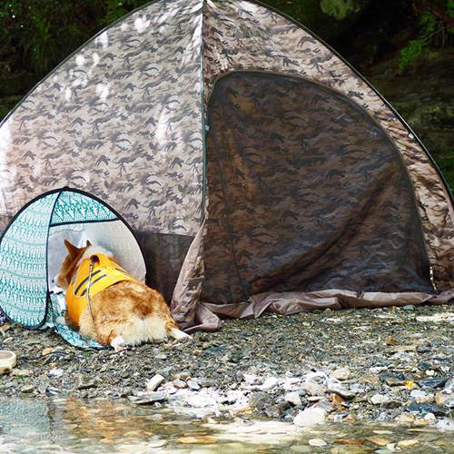 Dogilike.com :: รู้จัก! Erico คอร์กี้แดนปลาดิบสุดน่ารักที่มีคนติดตามกว่า 5 หมื่นคน