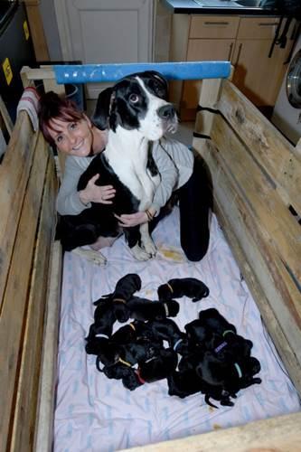 Dogilike.com :: ครอกใหญ่ที่สุดในโลก! แม่หมาคลอดลูก 21 ตัว แต่ละตัวน่ารักน่าเอ็นดู