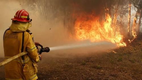 Dogilike.com :: ชื่นชม! ดับเพลิงช่วยชีวิตหมาหลง ขณะกำลังดับไฟป่าในออสเตรเลีย