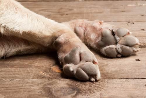 Dogilike.com :: 4 tips ง่าย ๆ ดูแลอุ้งเท้าน้องหมาให้ไร้กลิ่น ไม่อับชื้น !