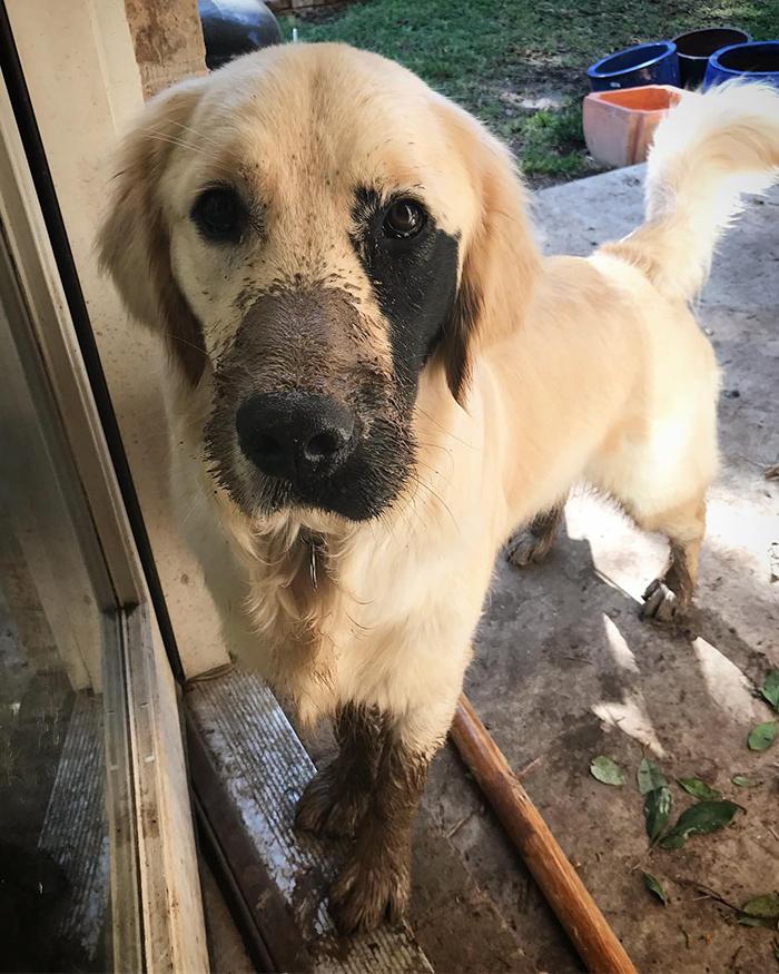 Dogilike.com :: เจ้า Enzo ตูบที่เกิดมาต่างจากสุนัขตัวอื่น แต่กลับมัดใจผู้คนไปทั่วโลก !