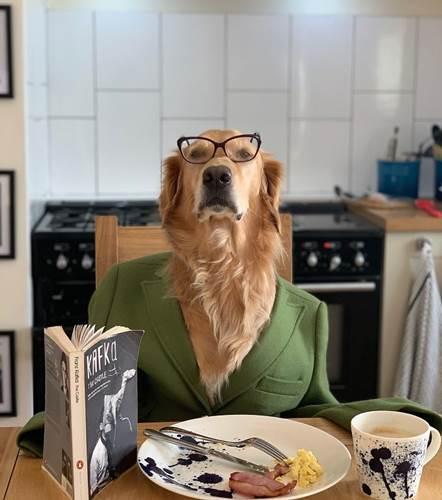 Dogilike.com :: สาวเผยภาพถ่ายคู่เจ้าตูบตลอด 1 ปี ก็เลยออกมาน่ารักแบบนี้ !
