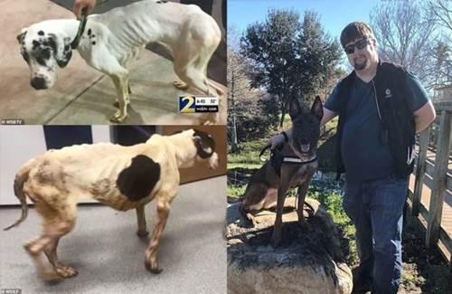 Dogilike.com :: หนุ่มฝึกสุนัขจบชีวิตตนเอง หลังถูกจับเพราะอดอาหารสุนัข 16 ตัวจนผอม !