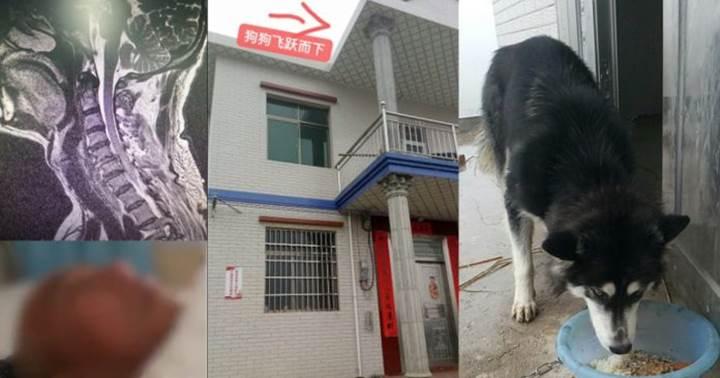 Dogilike.com :: ด้วยความคิดถึง! ฮัสกี้ดีใจเจ้าของกลับบ้าน ทุ่มตัวใส่เจ้าของเจ็บสาหัส!