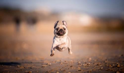 Dogilike.com :: หมาบิน! เผยเซ็ตภาพสวยที่จะทำให้คนรักสุนัขมีรอยยิ้ม