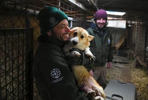 Dogilike.com :: ทัวโลกซึ้ง! ปฏิบัติการช่วยหมา 200 ตัวรอดถูกเชือดในเกาหลี