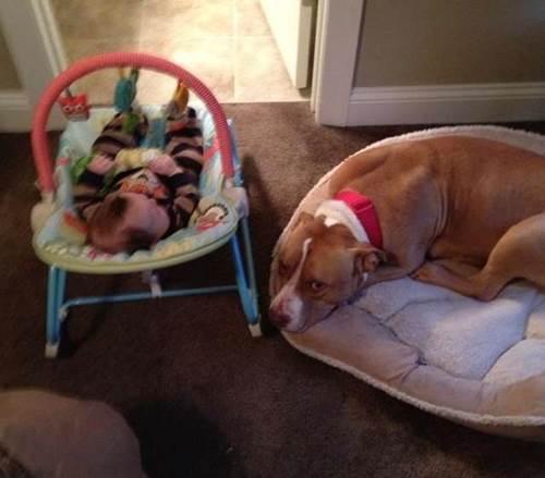 Dogilike.com :: พ่อแม่ทำเซอร์ไพรส์หนูน้อย รับเลี้ยงลูกหมาใหม่และนี่คือสิ่งที่เกิดขึ้น !