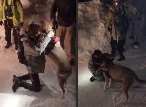 Dogilike.com :: เจ้าของปล่อยโฮหลังพบตูบที่โดนหิมะถล่มทับ กู้ภัยขุดหากว่า 5 ชั่วโมง!