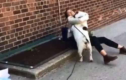Dogilike.com :: บูลด็อกเป็นหมาตลก! จู่โจมขโมยจูบหญิงสาวขณะนั่งคุยโทรศัพท์ (คลิป)