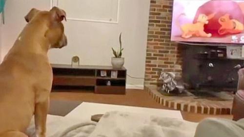 Dogilike.com :: อินจัด! ตูบเจอฉากเศร้าการ์ตูนดัง ครางหงิงๆ สงสารตัวละคร  (คลิป)