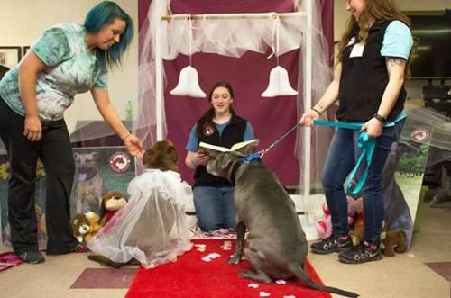 Dogilike.com :: น่ารัก! ศูนย์พักพิงฯจัดงานแต่งให้ 2 ตูบถูกทิ้ง หวังคนใจดีรับเลี้ยง