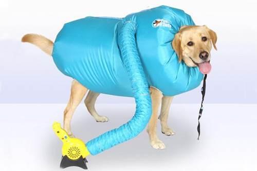 Dogilike.com :: ของมันต้องมี! เผยตัวช่วยเป่าขนสุนัขให้แห้งง่าย ๆ เพียงไม่กี่นาที