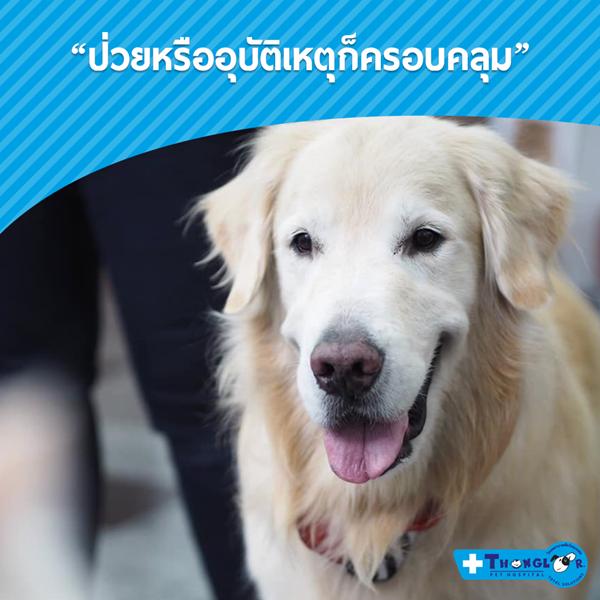 Dogilike.com :: 5 เรื่องลับ ที่จะทำให้คุณรู้ว่าซื้อประกันให้สัตว์เลี้ยงดีแบบนี้นี่เอง!!
