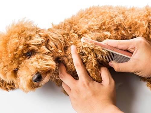 Dogilike.com :: เปิดดูขนน้องหมา! มีอะไรที่เจ้าของต้องระวังบ้างนะ
