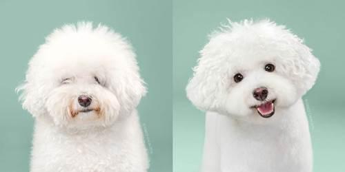 Dogilike.com :: ไขข้อสงสัย ทำไมไม่ควรไถขนน้องหมา(บางพันธุ์)ในช่วงหน้าร้อน !