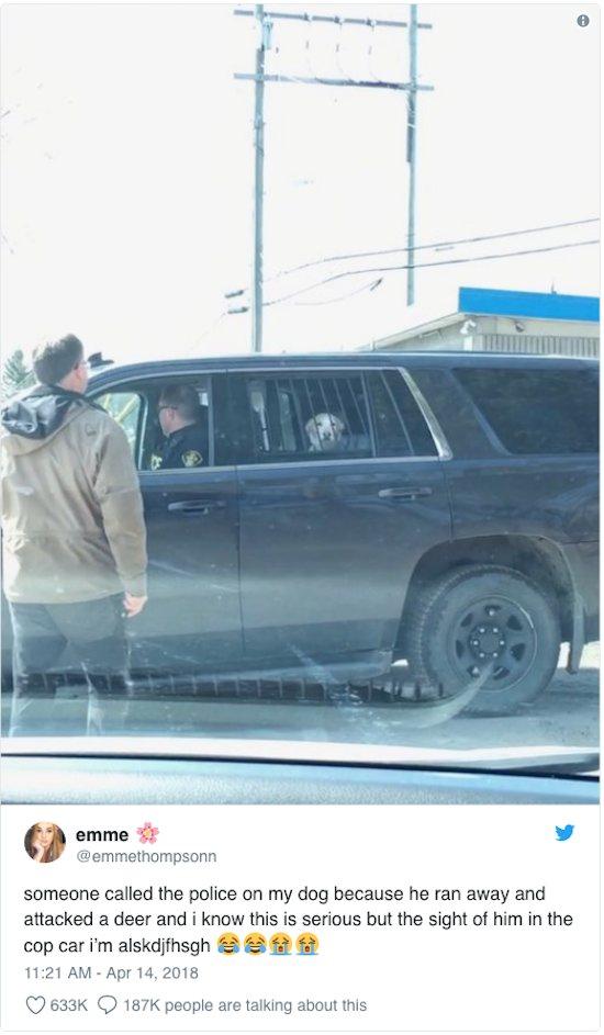 Dogilike.com :: โดนเข้าแล้ว! เจ้าตูบถูกตำรวจจับหลังพบวิ่งไล่ตามกวาง