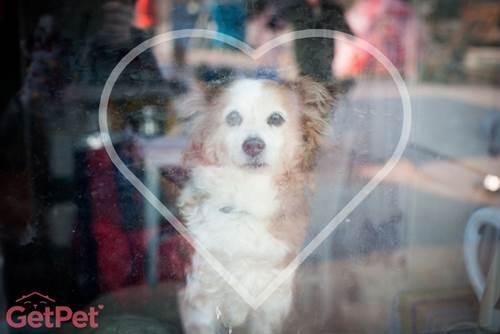 Dogilike.com :: GetPet แอปฯ เจ๋งช่วยหาบ้านให้น้องหมาในลิทัวเนีย!