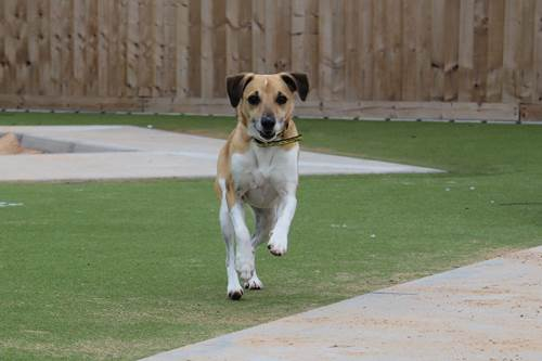 Dogilike.com :: ศูนย์พักพิงฯ ประกาศตามหา คนช่วยนำทางสุนัขตาบอด