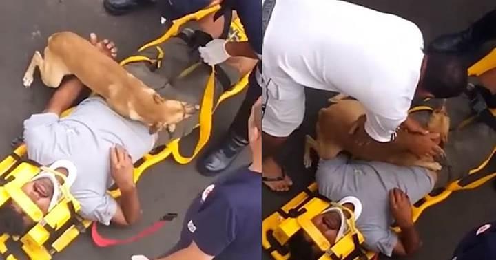 Dogilike.com :: ตูบซื่อสัตย์นอนกอดหนุ่มเจ้าของที่ได้รับบาดเจ็บไม่ยอมห่าง ! (คลิป)