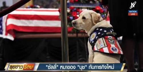 Dogilike.com :: เจ้า ซัลลี่ อดีตสุนัขผู้ช่วย ปธน.บุช ได้รับภารกิจใหม่แล้ว !