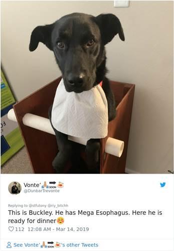 Dogilike.com :: เรื่องราวสุดซึ้ง! เจ้าของทำเก้าอี้พิเศษให้สุนัขป่วยนั่งกินอาหารได้
