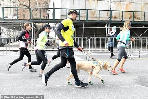 Dogilike.com :: 3 ลาบราดอร์ฯ นำทางหนุ่มตาบอดวิ่งมาราธอนสำเร็จเป็นคนแรกในสหรัฐฯ!