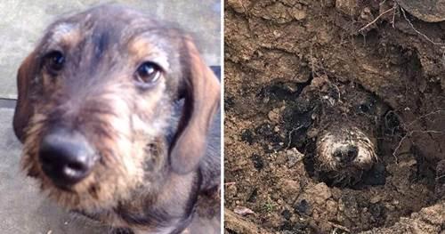 Dogilike.com :: ตูบหายจากบ้าน 4 วัน พบอีกทีติดอยู่ในโพรงกระต่าย !