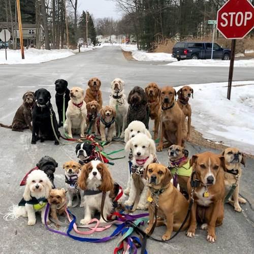 Dogilike.com :: ของจริง! เผยภาพน่ารักเหล่าเจ้าตูบเดินเล่น ถ่ายรูปด้วยกันทุกวัน