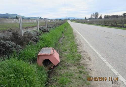 Dogilike.com :: ตูบถูกทิ้งพร้อมบ้านหลังน้อย ชาวเน็ตจวกคนทิ้งจิตใจทำด้วยอะไร!
