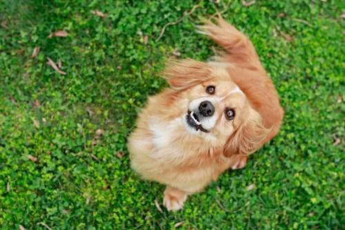 Dogilike.com :: เปิดโผ! 10 พันธุ์สุนัขที่คนญี่ปุ่นนิยมเลี้ยงประจำปี 2018