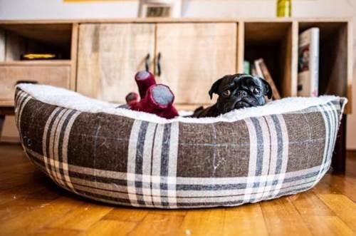 Dogilike.com :: ดราม่าหนัก! เยอรมนียึดหมาปั๊กของลูกหนี้ค้างภาษีไปขายบนอีเบย์