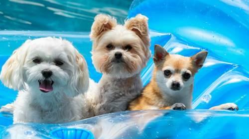 Dogilike.com :: รู้ทันความผิดปกติของน้องหมาที่เกิดขึ้นได้เมื่ออากาศร้อนจัด!