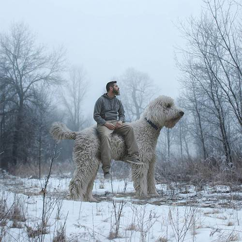 Dogilike.com :: เนียนสุดๆ! หนุ่มไอเดียเจ๋งจับตูบมาถ่ายภาพ ตัดต่อให้ตัวใหญ่ยักษ์