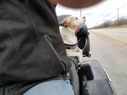 Dogilike.com :: หนุ่มไบเกอร์เห็นคนโยนตูบทิ้งกลางทาง เขาเลยตัดสินใจทำแบบนี้!