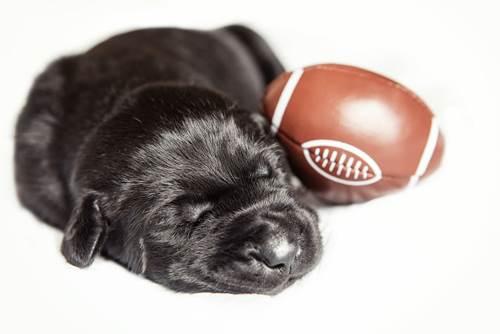 Dogilike.com :: เจ้าของใหม่งงรับเลี้ยงตูบ 1 ตัวแต่จู่ ๆ ก็ได้เพิ่มอีกถึง 12 ตัว!