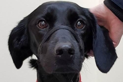 Dogilike.com :: ตูบป่วยไม่ยอมกินอาหาร เจ้าของพาหาหมอเห็นภาพเอ็กซเรย์ถึงกับตกใจ!