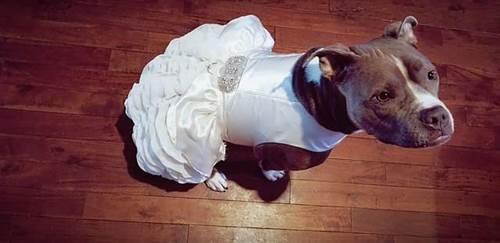 Dogilike.com :: เพราะสุนัขคือครอบครัว! คู่รักมะกันสั่งซื้อชุดพิเศษให้ตูบใส่ร่วมพิธีแต่งงาน