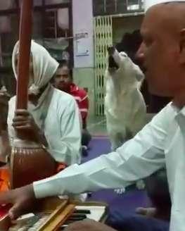 Dogilike.com :: ตูบแสนรู้ร่วมวงร้องเพลงกับวงดนตรีในอินเดีย มาบ่อยจนผู้คนเอ็นดู!