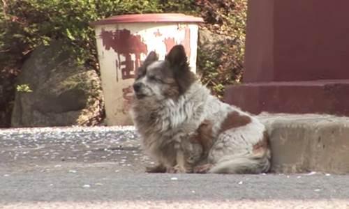 Dogilike.com :: เรื่องราวเจ้า Bokshil ตูบสูงวัยที่เฝ้ารอเจ้าของที่ทิ้งไปนานกว่า 10 ปี!