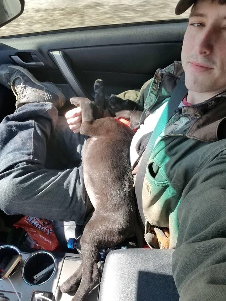 Dogilike.com :: หนุ่มหูหนวกรับเลี้ยงลูกหมาหูหนวก ฝึกคำสั่งภาษามือไว้สื่อการกัน!