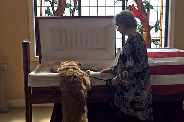 Dogilike.com :: ชาวเน็ตซึ้ง! ภาพเจ้าตูบเกาะโรงศพ อำลาเจ้านายสุดรักเป็นครั้งสุดท้าย