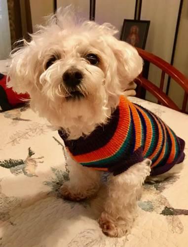 Dogilike.com :: ไม่เหลือเค้าเดิม! ตูบป่วยหนัก เจ้าของไม่เคยพาหาหมอเลยสักครั้ง