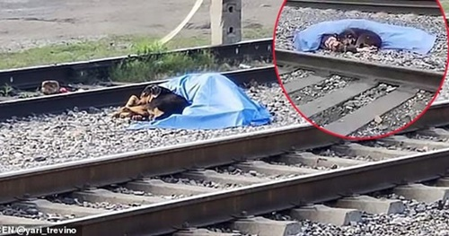 Dogilike.com :: ตูบซื่อสัตย์เฝ้าศพเจ้านายกลางรางรถไฟ ปกป้องไม่ให้ใครเข้าใกล้!