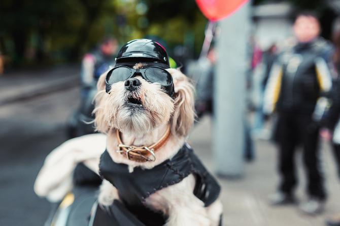 Dogilike.com :: จัดอันดับ 5 สิ่งอันตราย ห้ามทำกับน้องหมาในช่วงสงกรานต์